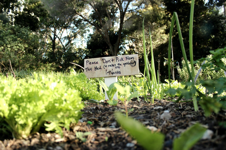 Monash Permaculture Garden