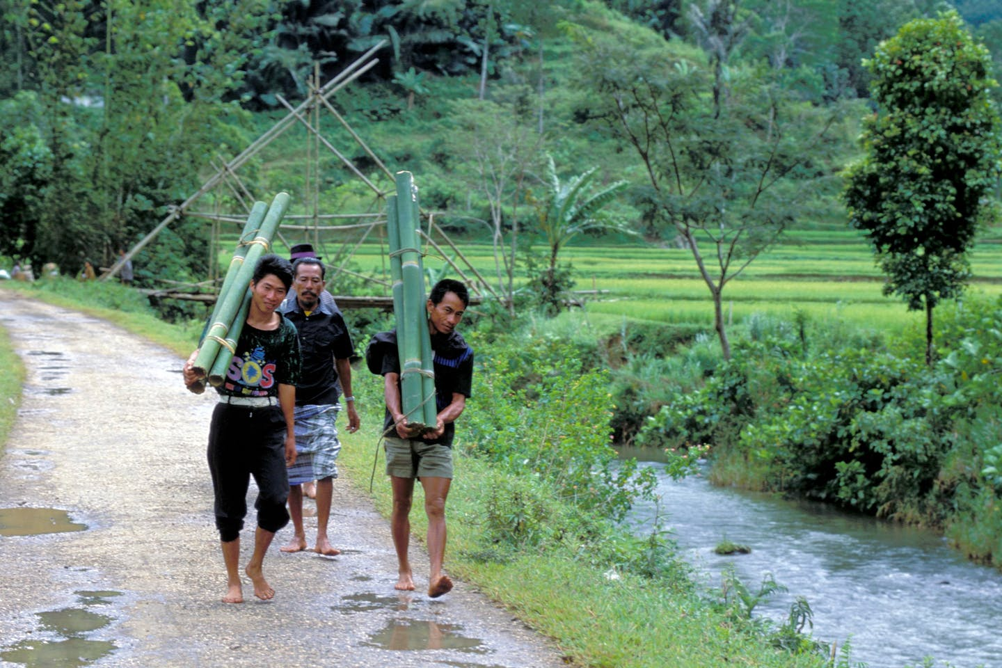 men carrying bamboo
