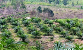 EU parliament unfazed by trade fight over palm biofuel phase-out
