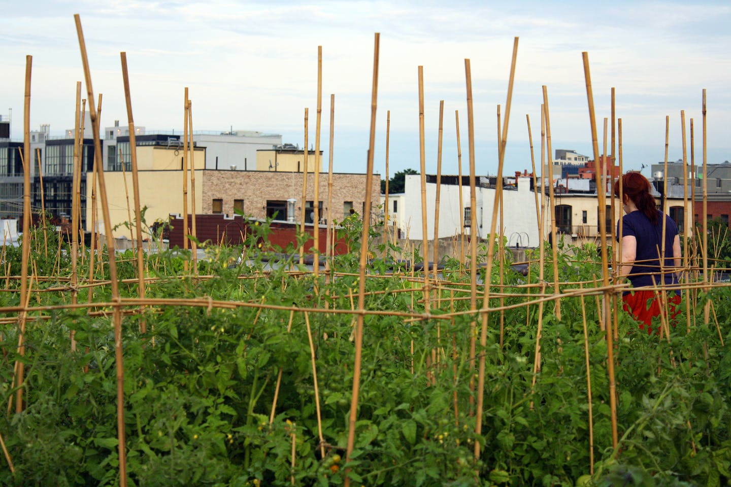 Rooftop farm greenpoint