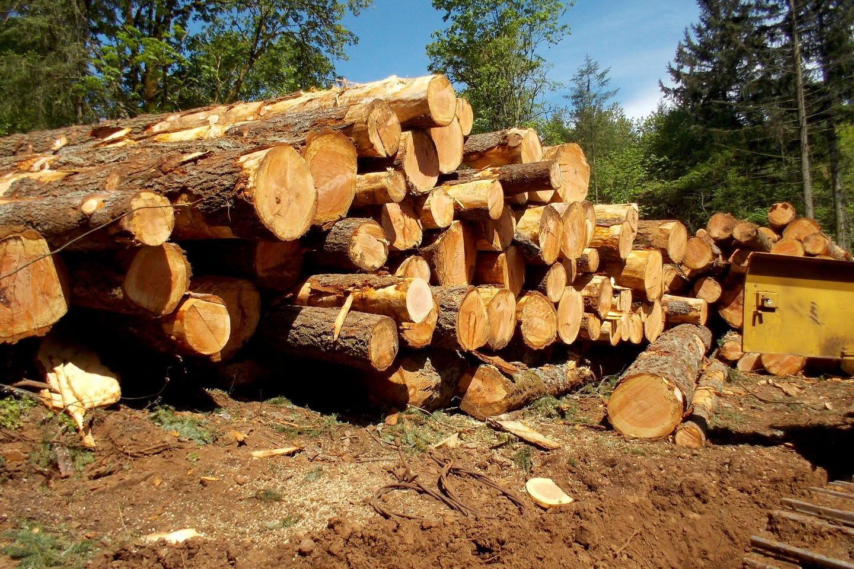 Logging landscape