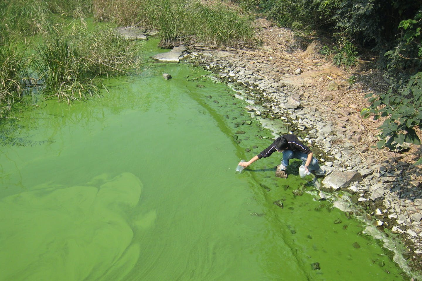 Researcher collects slimy green sample of algal bloom in Lake Taihu, China