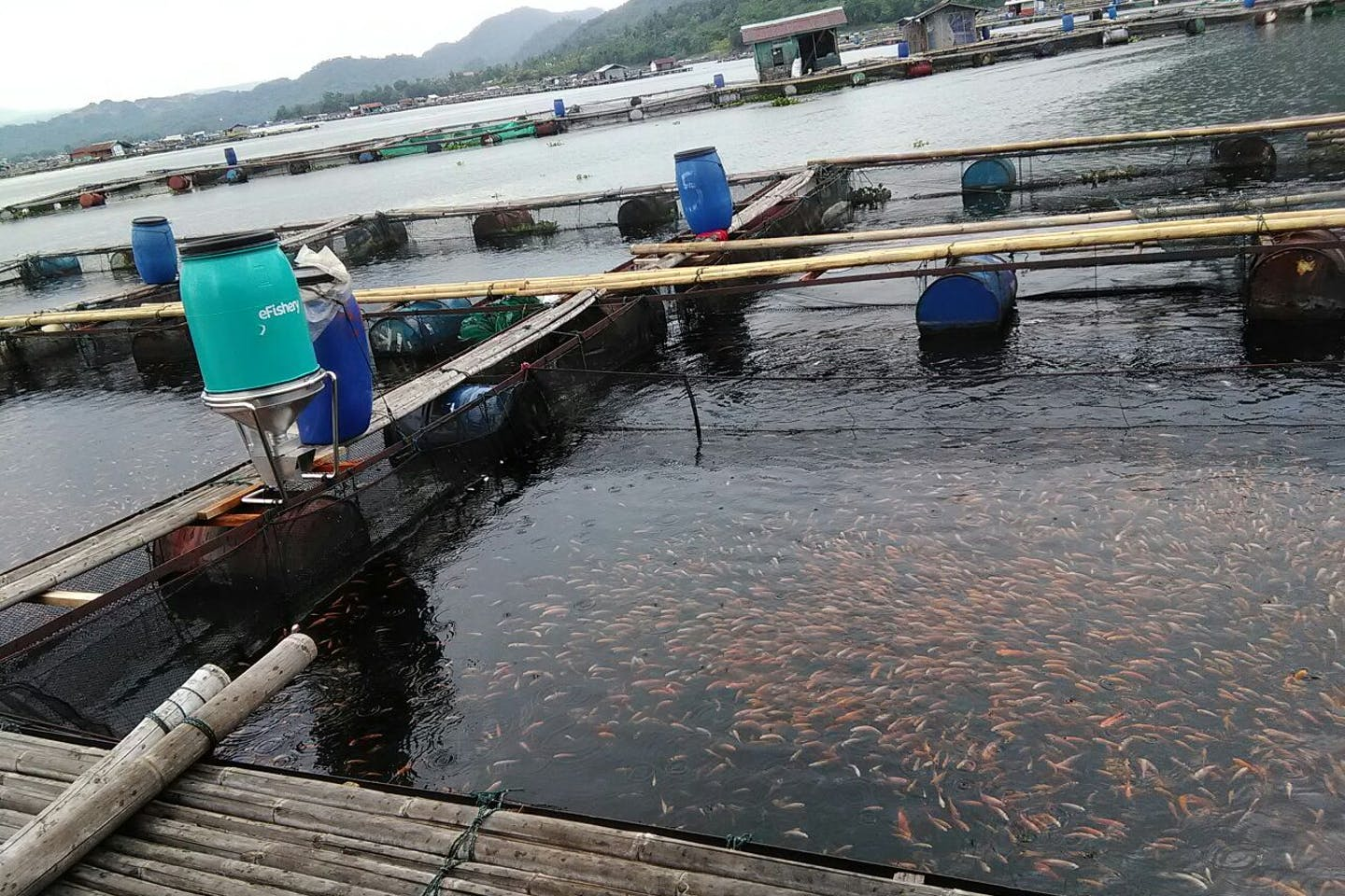 eFishery set up at a fish pond in Indonesia