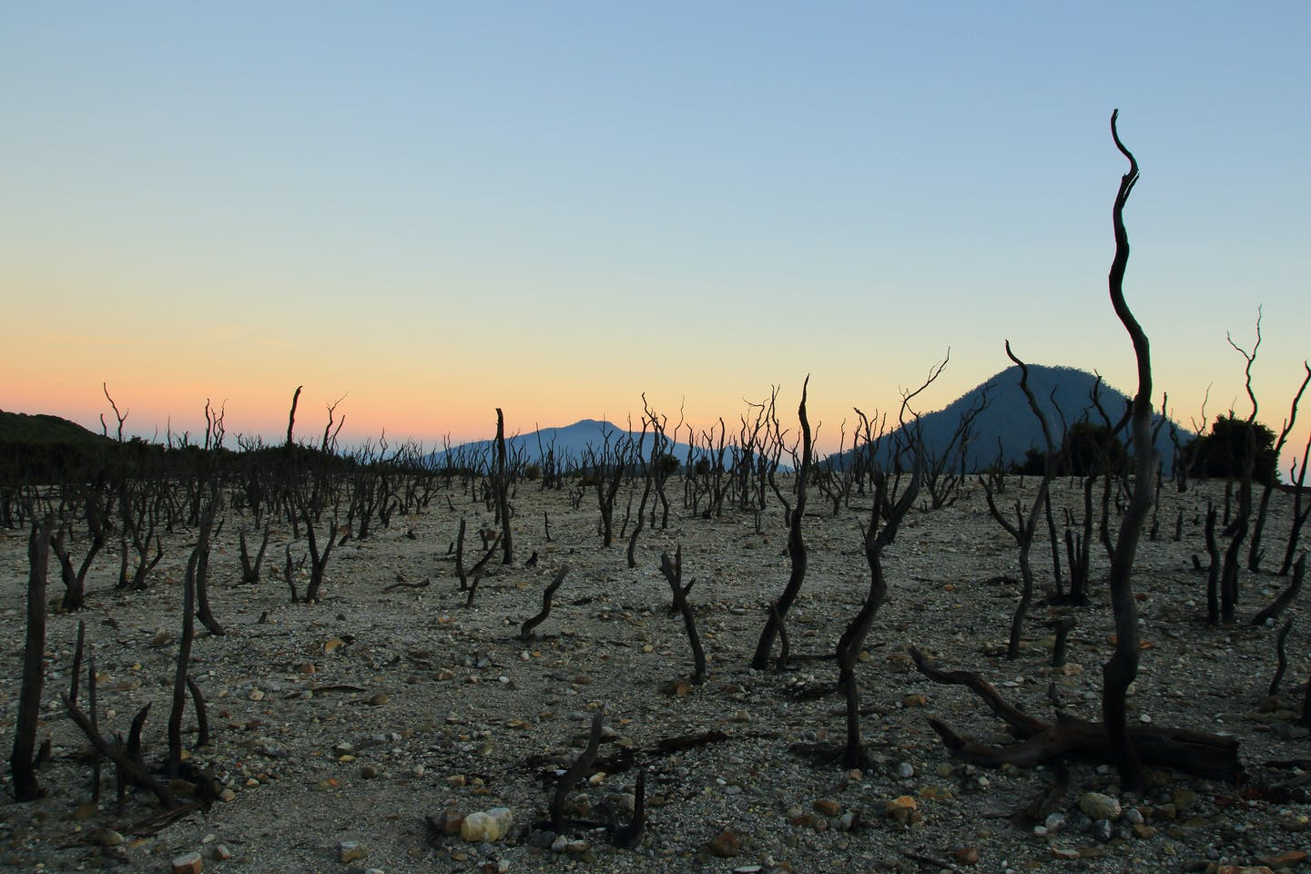 The Papandayan Dead Forest in Java, Indonesia