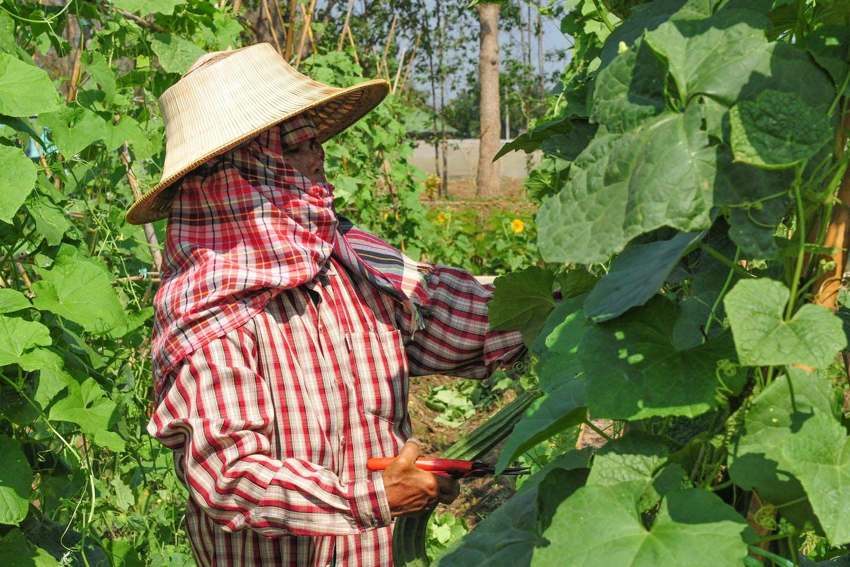 Farmer under agricultural training in Thailand