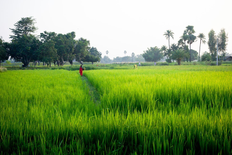 A field in Janakpur, Nepal at dawn.