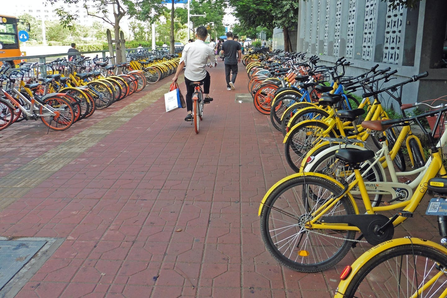 Bicycles belonging to a ride-sharing programme line a street in China