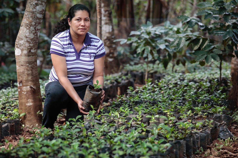 Coffee plantation El Salvador