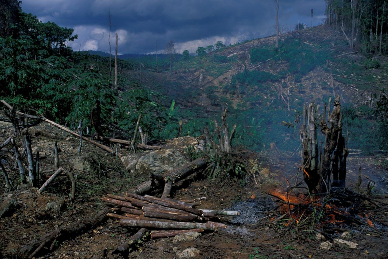 deforestation west java indonesia