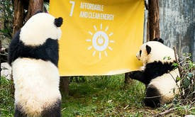 Two panda cubs, two little girls and the Sustainable Development Goals