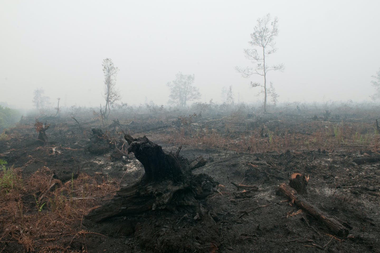 palangkaraya peat burning