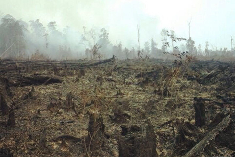 burnt peatlands in Indonesia