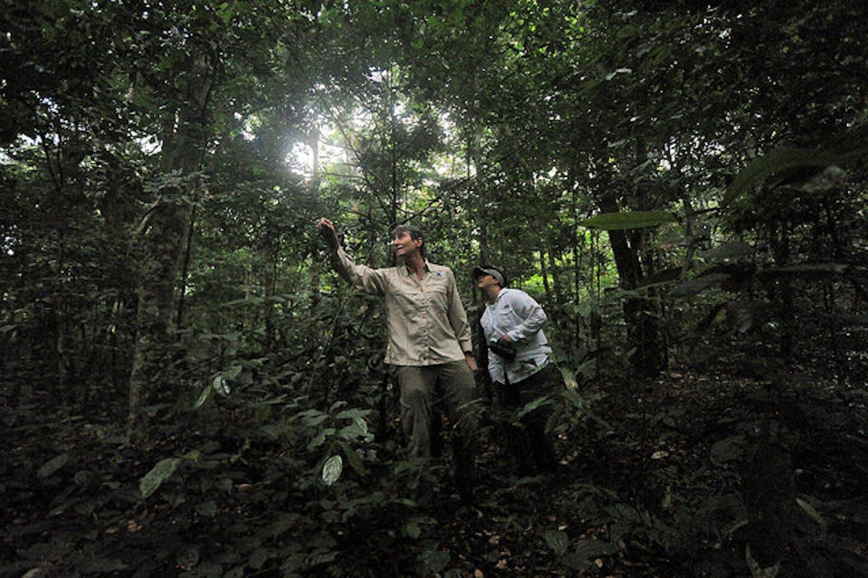 Gabon forest reserve