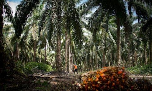 How Brazil can save the Amazon through bioeconomy