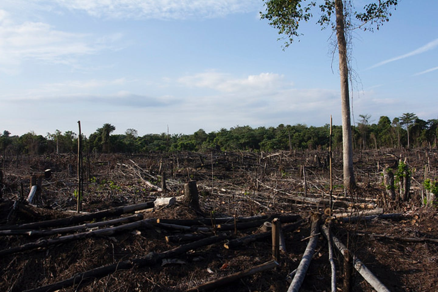burnt and degraded forest riau