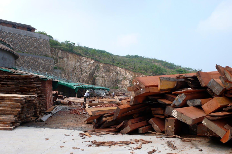 timber china