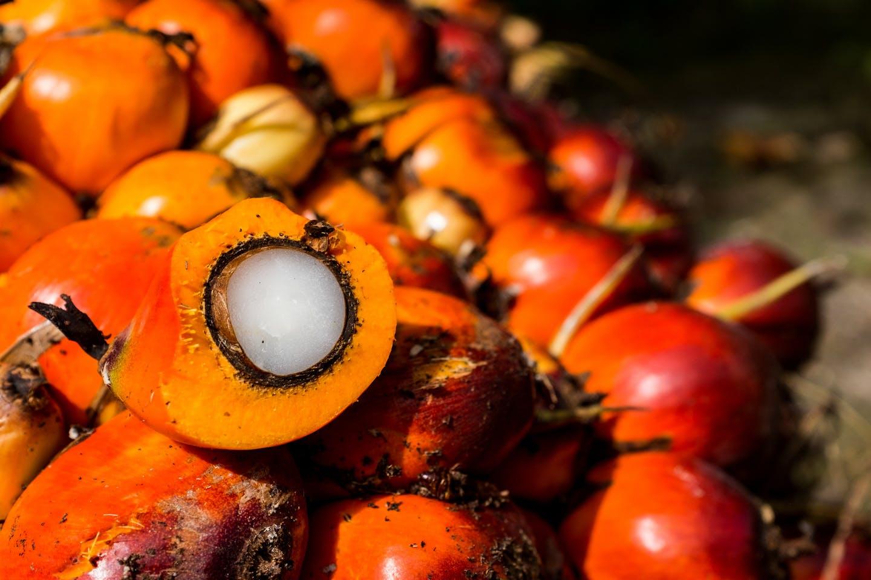 fresh oil palm fruit