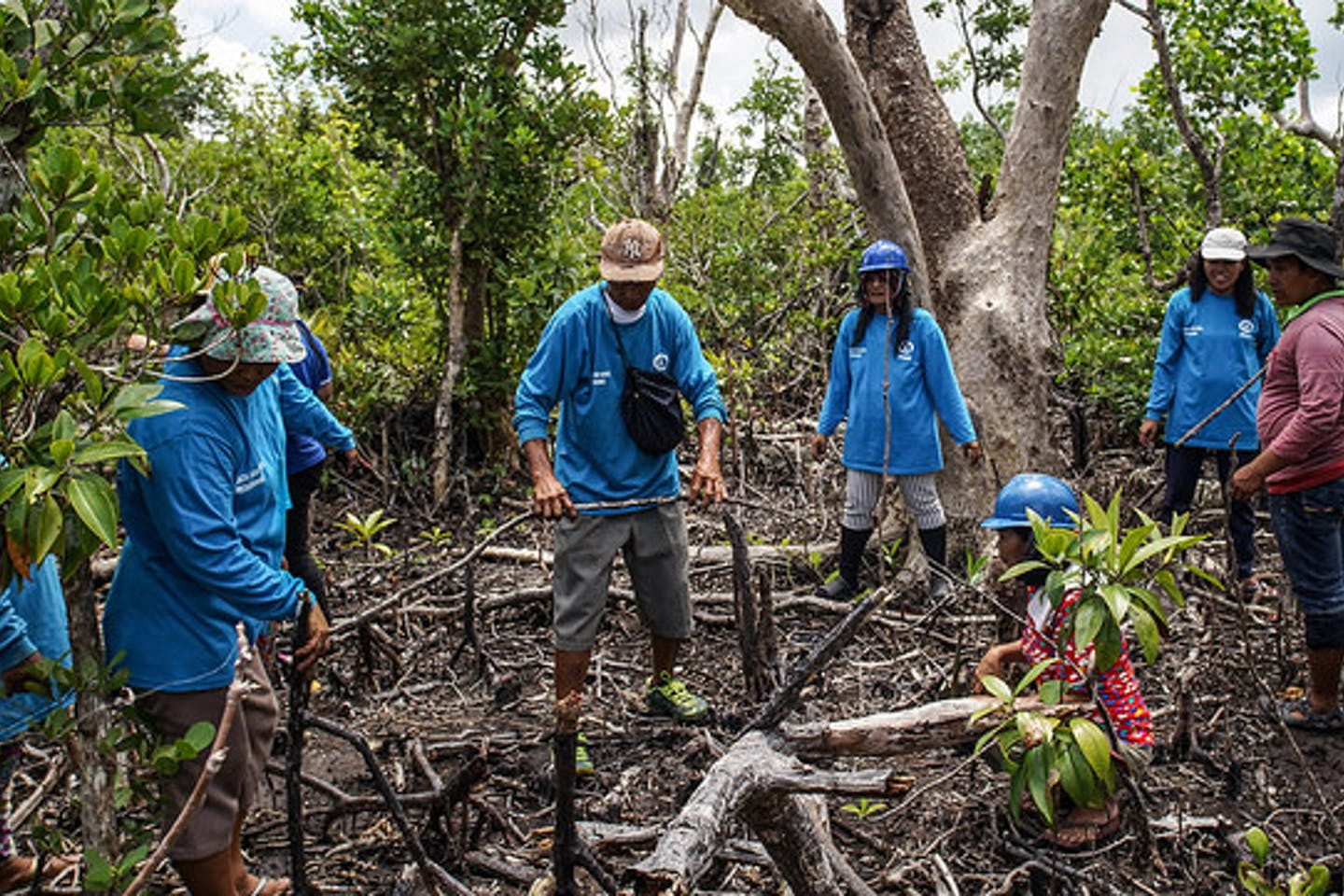 Mangrove management in the Philippines