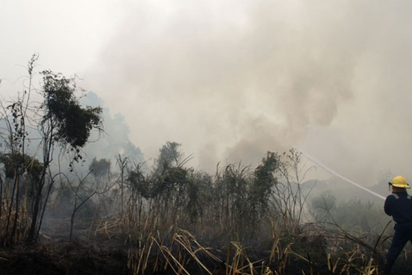 Forest fire in Pekanbaru, Riau, Indonesia