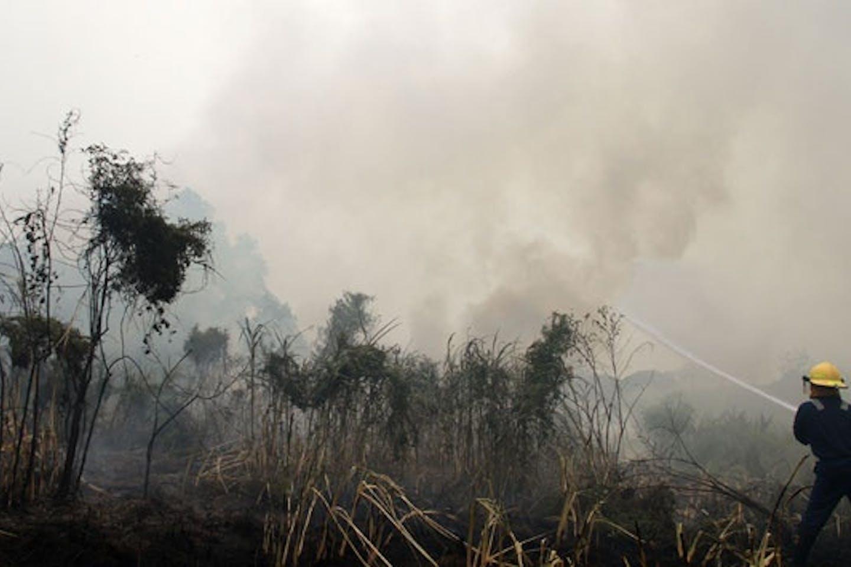 Forest fire in Pekanbaru, Riau, Indonesia
