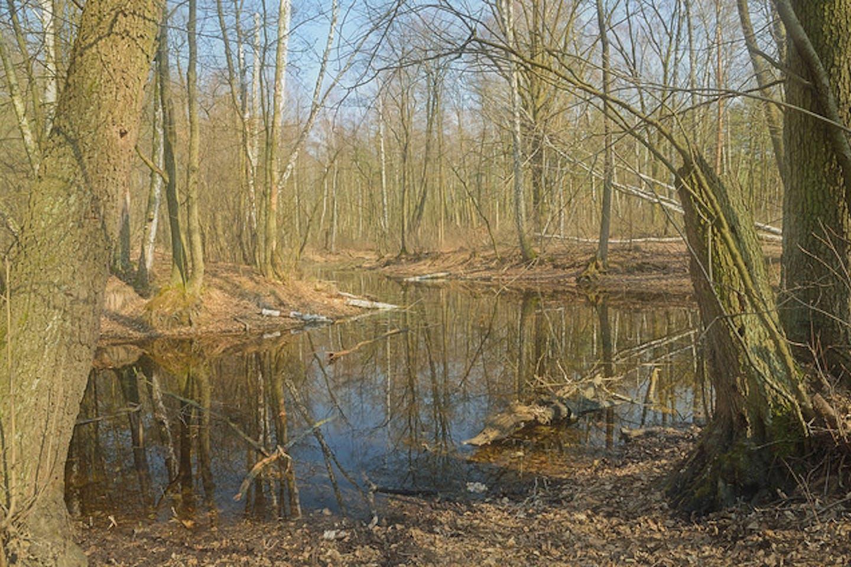 Poland park lake
