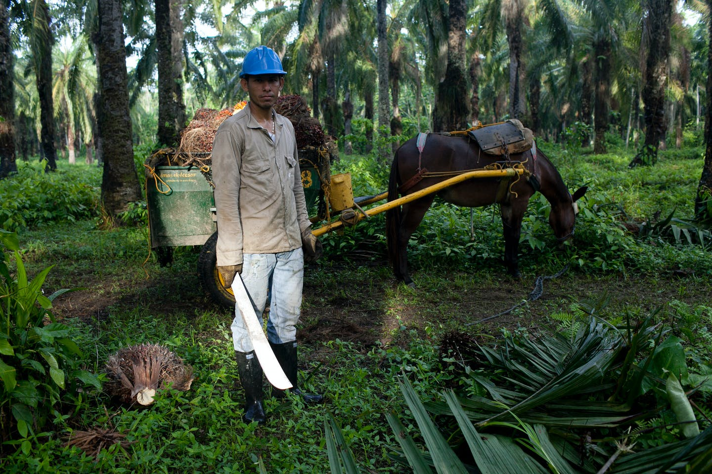 palm oil worker colombia