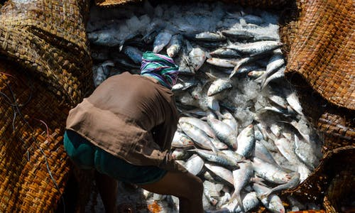Bangladesh bans sea fishing for all, affecting half a million people
