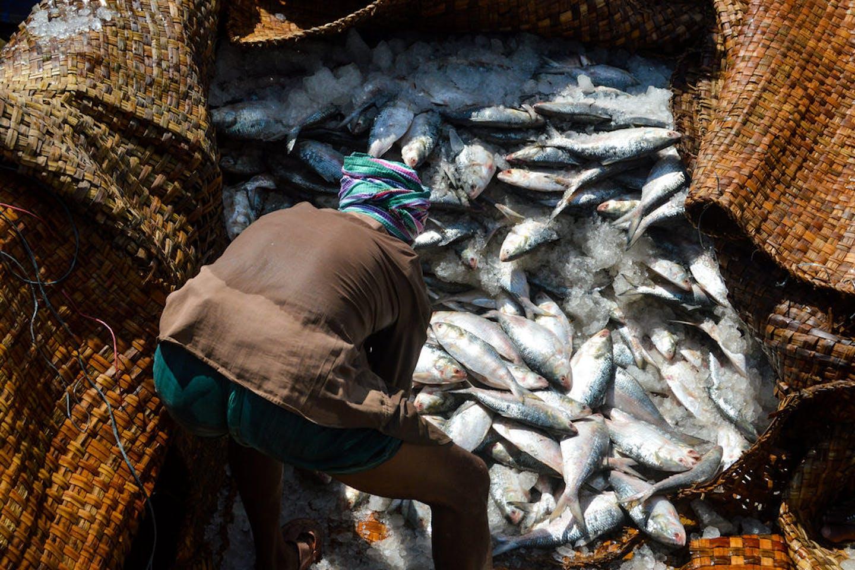 Bangladesh fishing