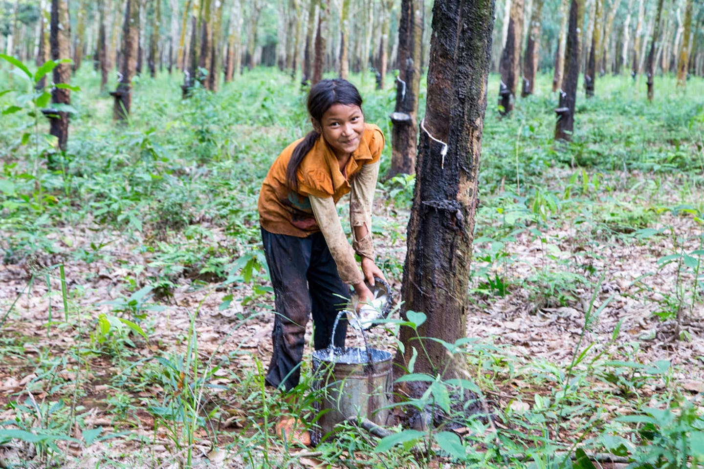 young girl collecting rubber in cambodia