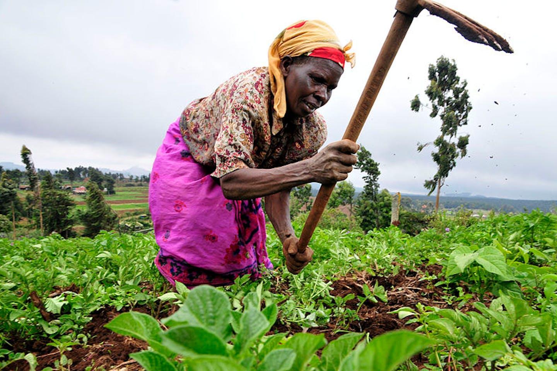 Farmer, Kenya