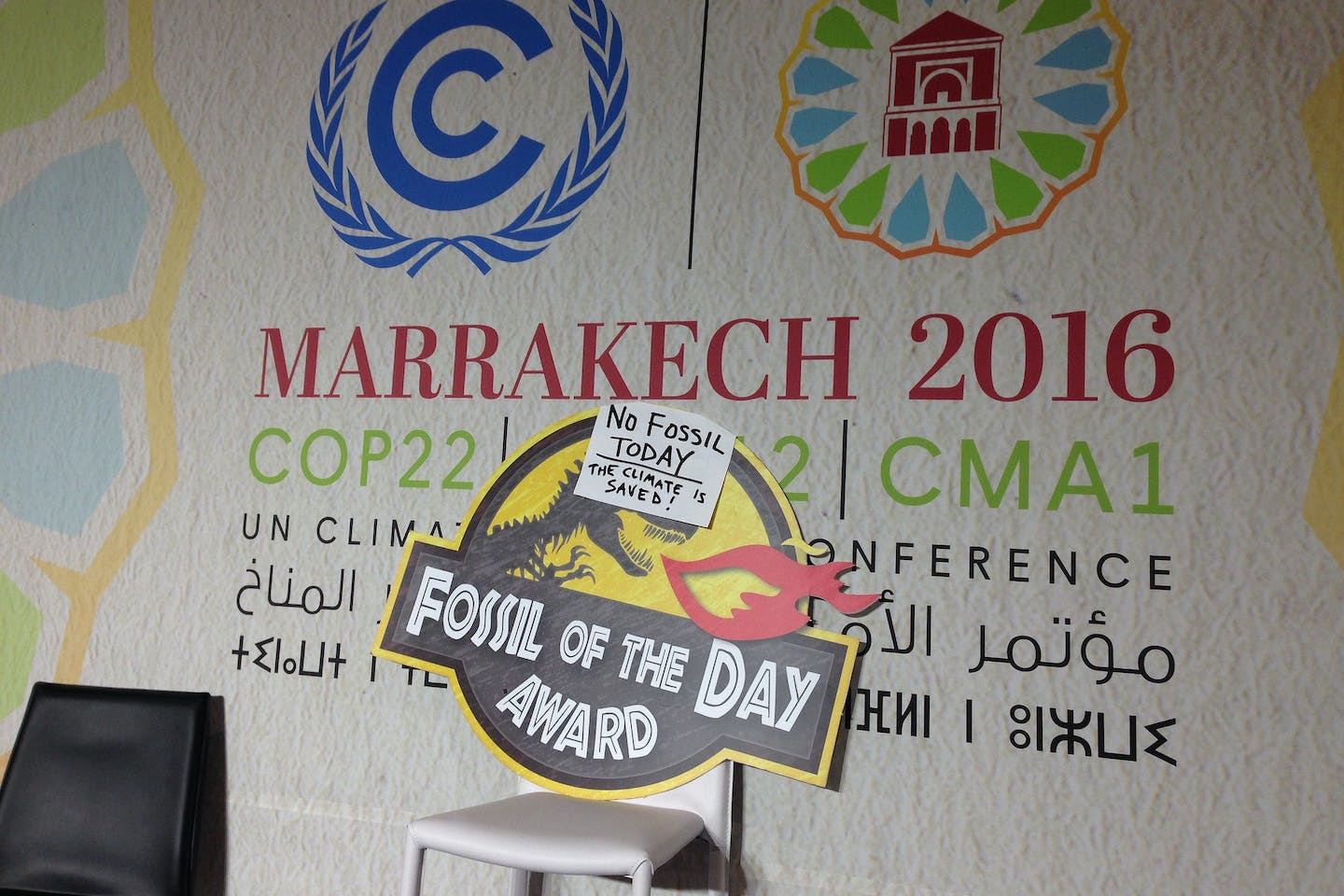 fossil of the day marrakesh
