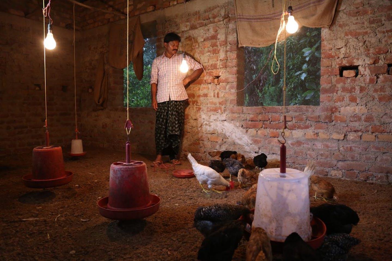 chicken farmer in India
