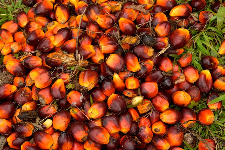 palm oil fuits