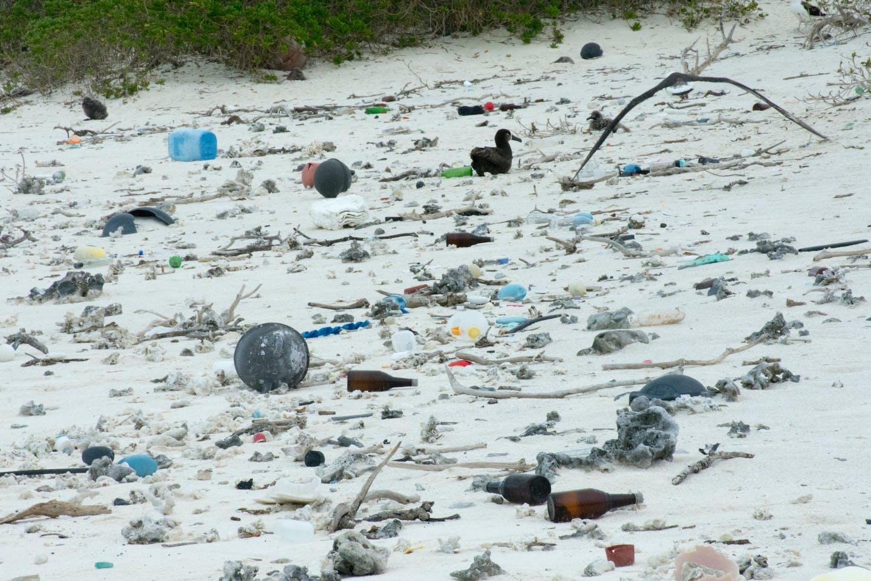 hawaii beach plastic litter