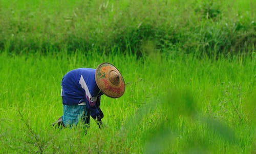 As fall armyworms invade Asia, we need more than chemical warfare from Big Agri