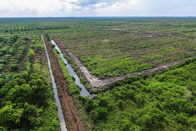 drainage canals in palm oil plantation, dompas riau