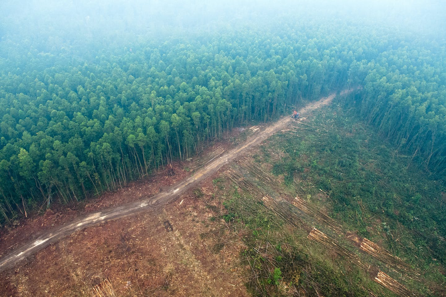 deforestation imports impact Indonesia's forests