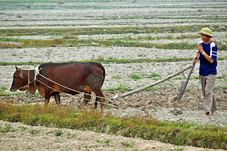 farmer in dry fields in vietnam