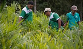 Indonesia's sustainable districts bet on corporate deforestation pledges