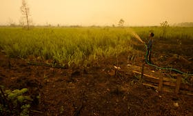 Rainforest Alliance aims to help ethical growers get climate-smart