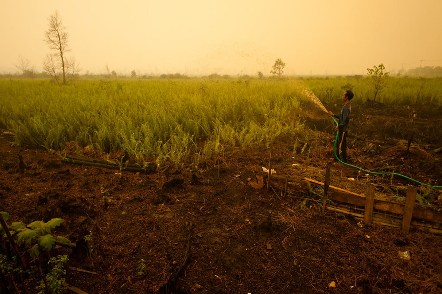 crops Central Kalimantan Indonesia