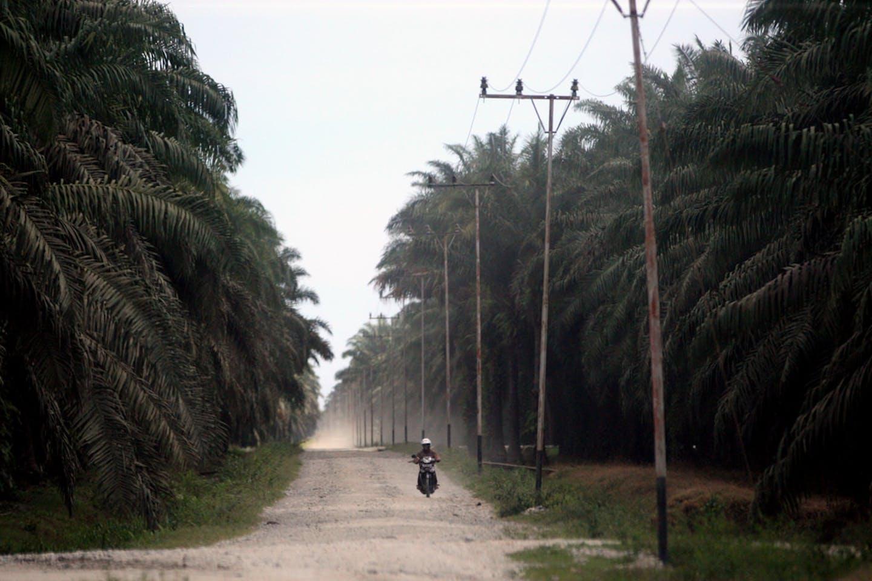 peatland indonesia