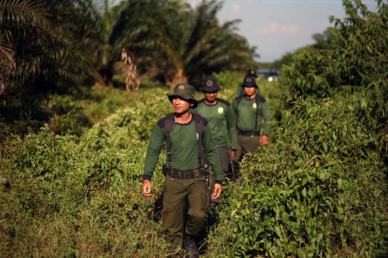 Indonesian rangers patrol Tripa
