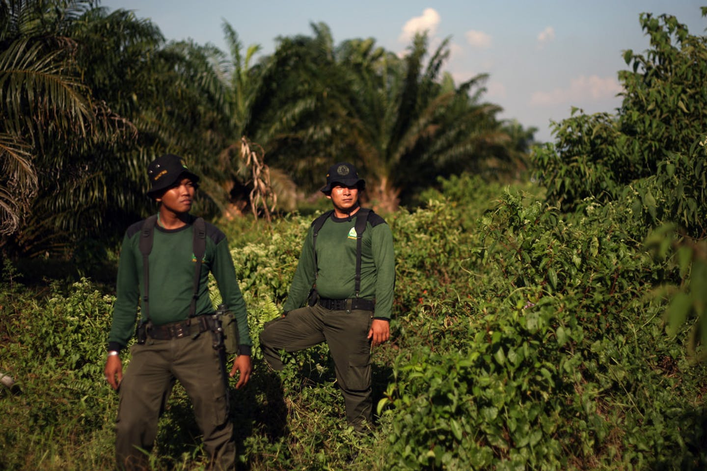 indonesian forest rangers palm oil