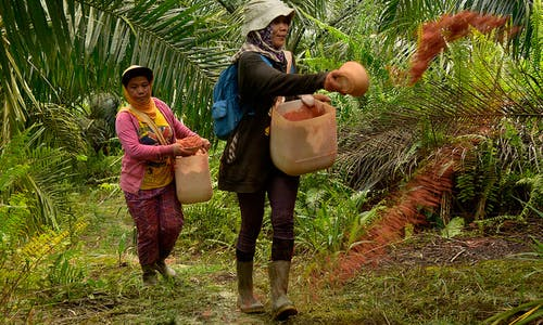 What do Indonesians really think about palm oil?