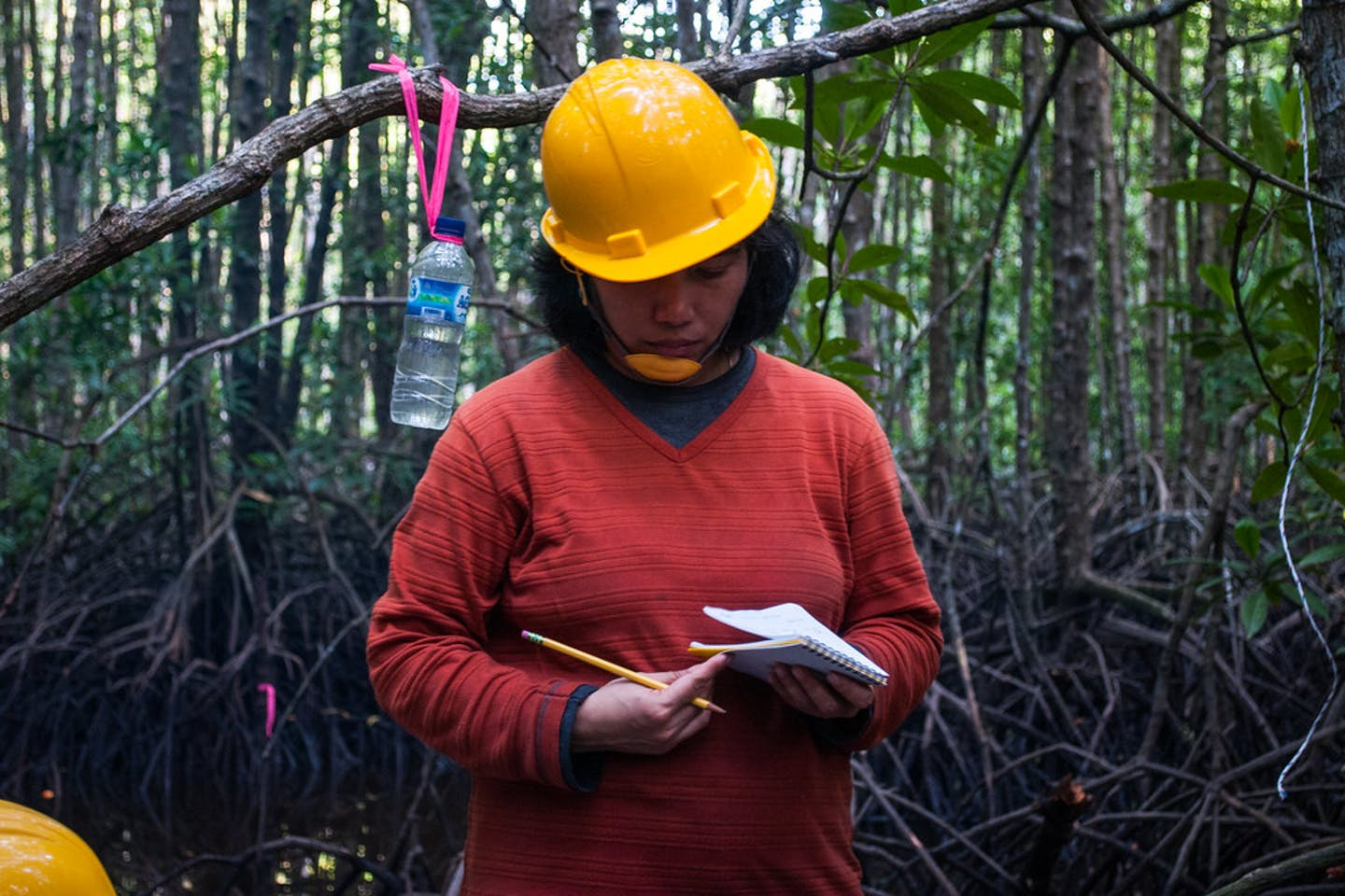 woman scientist forest indonesia
