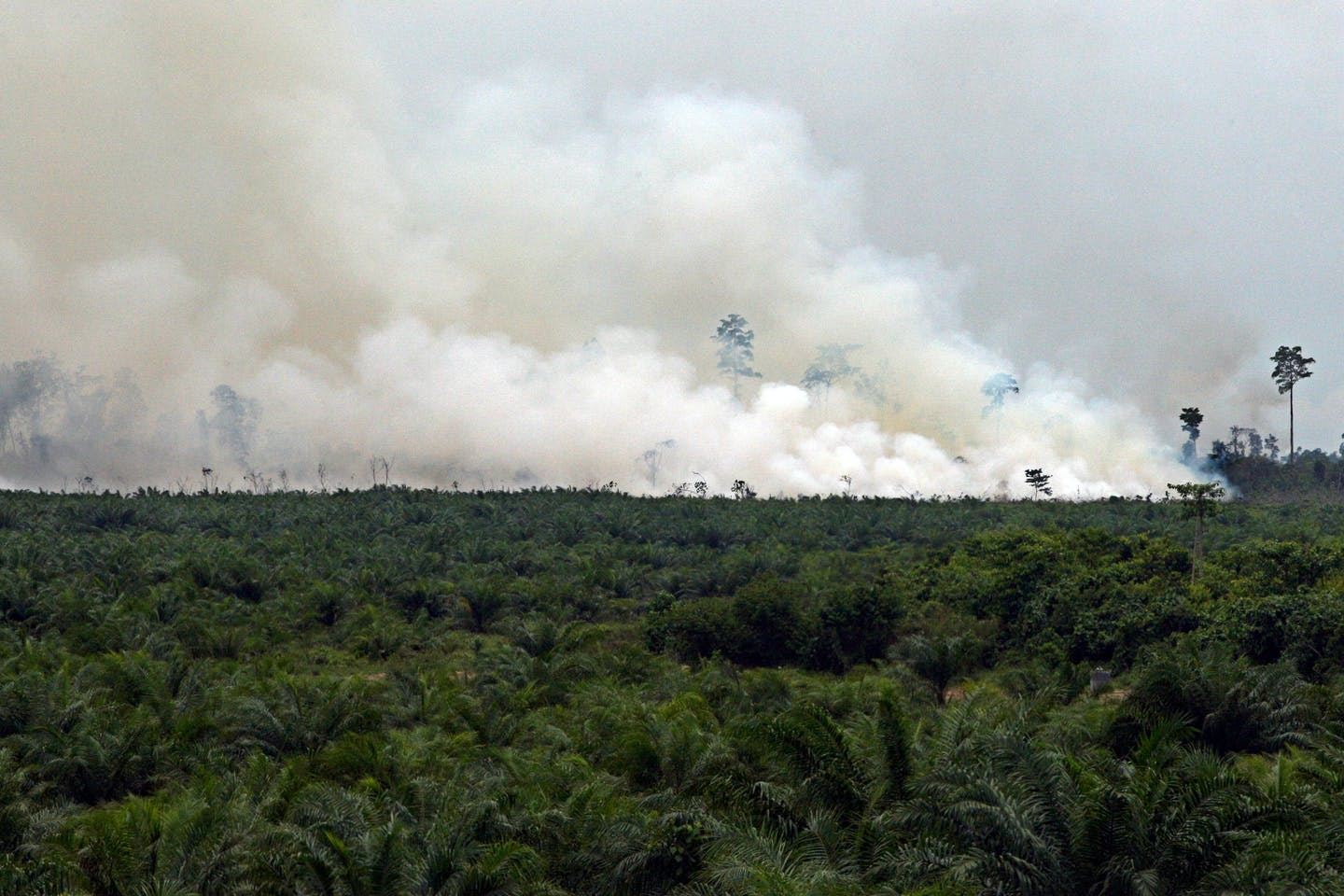 billowing smoke from peat swamp