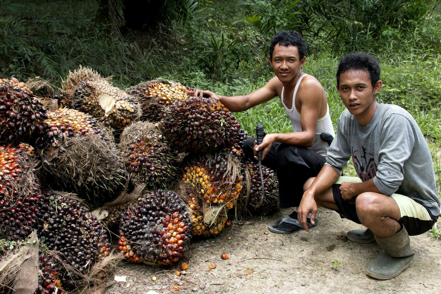 Oil Palm Harvesters in Indonesia