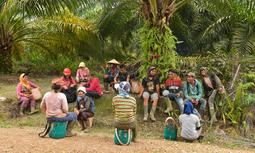 Where is the palm oil industry on human rights?