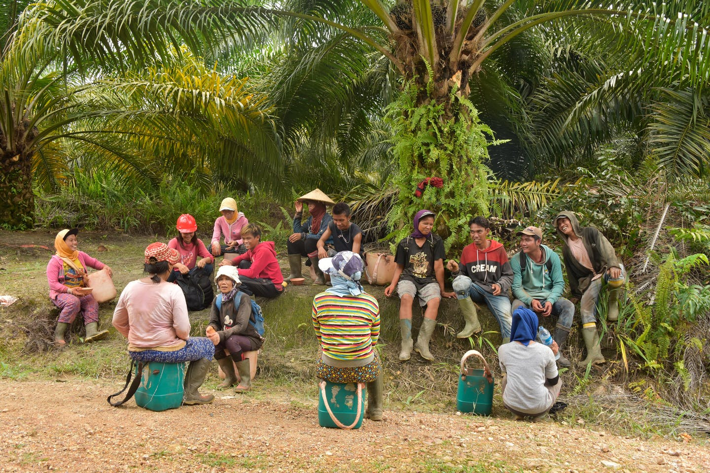 oil palm plantation workers take a rest from work